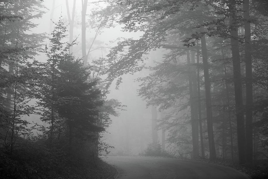Horizontal Photograph - Foggy Forest by Yago Veith