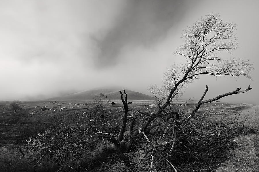 Foggy Photograph - Foggy Grapevine by Richard Leon