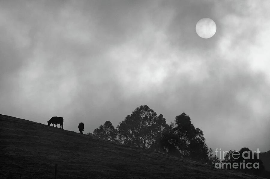Sunrise Photograph - Foggy Grazing Half Moon Bay California by Gus McCrea