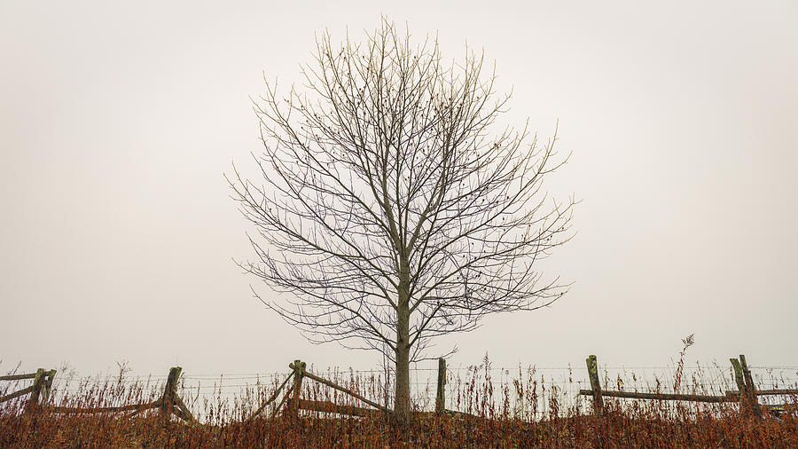 Simple Photograph - Foggy Lone Tree Hill by Mike Koenig