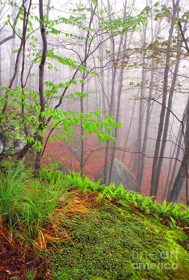 West Virginia Photograph - Foggy Misty Spring Morning by Thomas R Fletcher