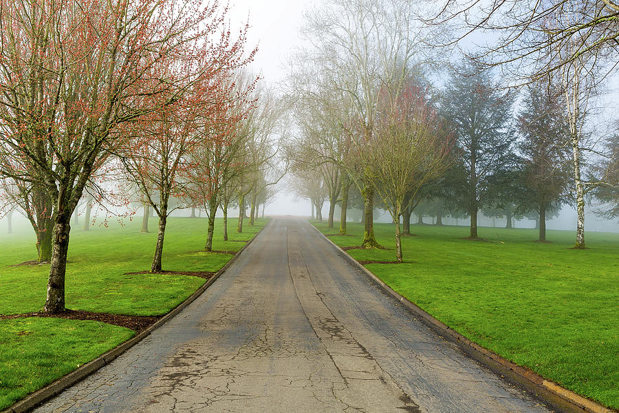 Fog Photograph - Foggy Morning At The Park by David Gn