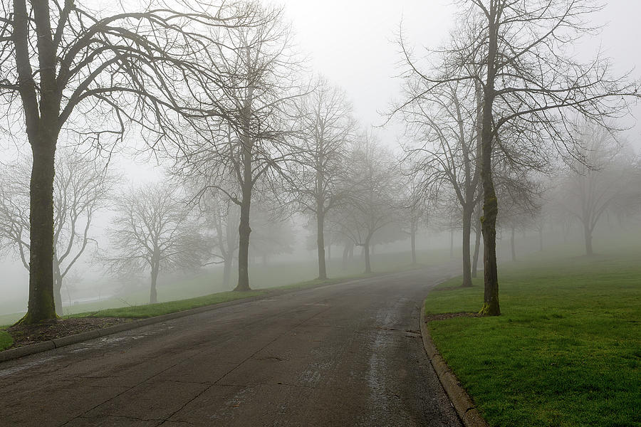 Fog Photograph - Foggy Morning At The Park Winding Path by David Gn