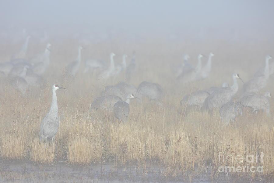 Foggy Morning At Bosque Del Apache Photograph
