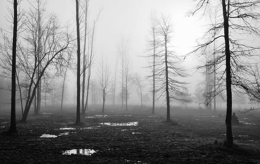 Landscape Photograph - Foggy Morning by Conn Hutzell
