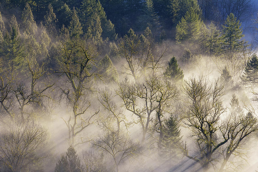 Mount Hood Photograph - Foggy Morning In Sandy River Valley by David Gn