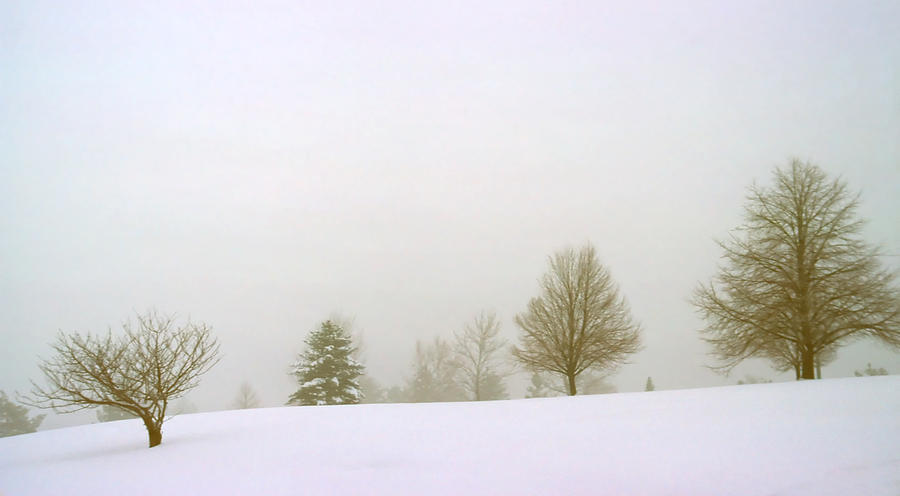 Winter Photograph - Foggy Morning Landscape 15 by Steve Ohlsen
