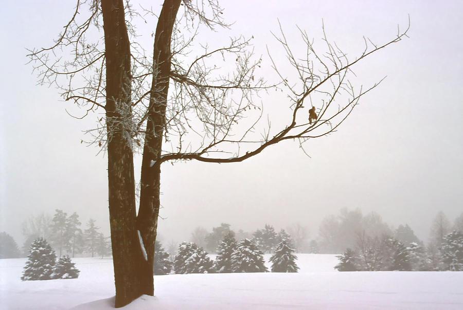 Winter Photograph - Foggy Morning Landscape 16 by Steve Ohlsen
