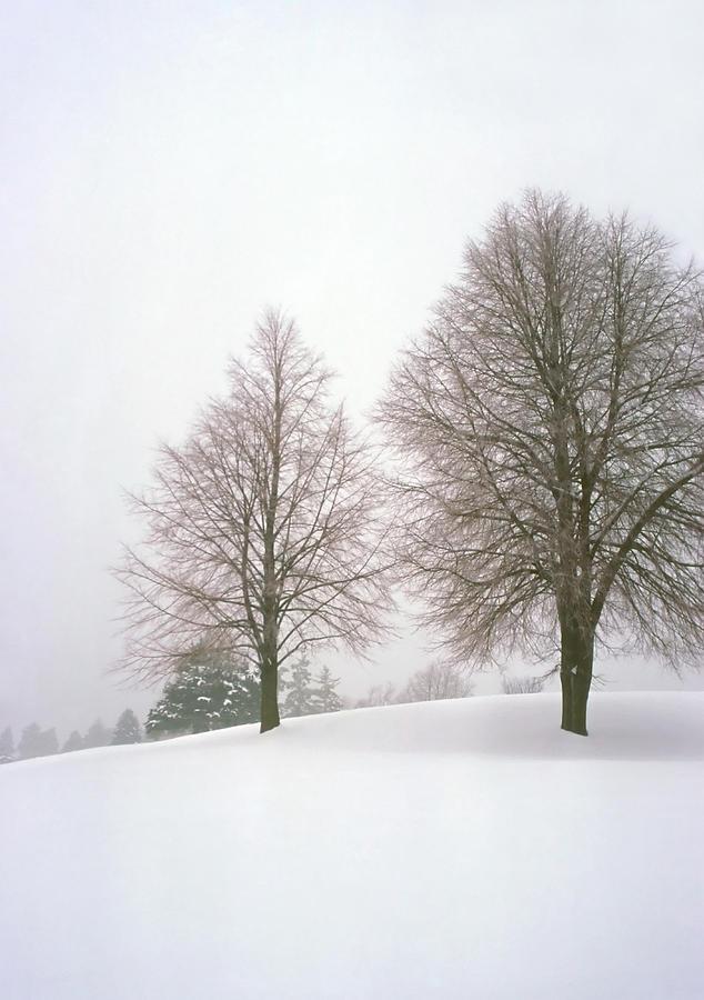 Winter Photograph - Foggy Morning Landscape 19 by Steve Ohlsen