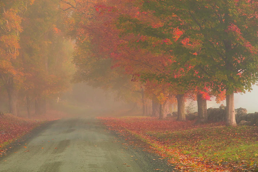 Autumn Photograph - Foggy Morning On Cloudland Road by Jeff Folger