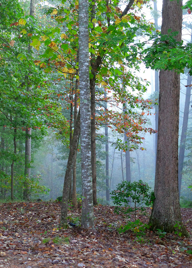 Foggy Photograph - Foggy Morning by Rosie Brown