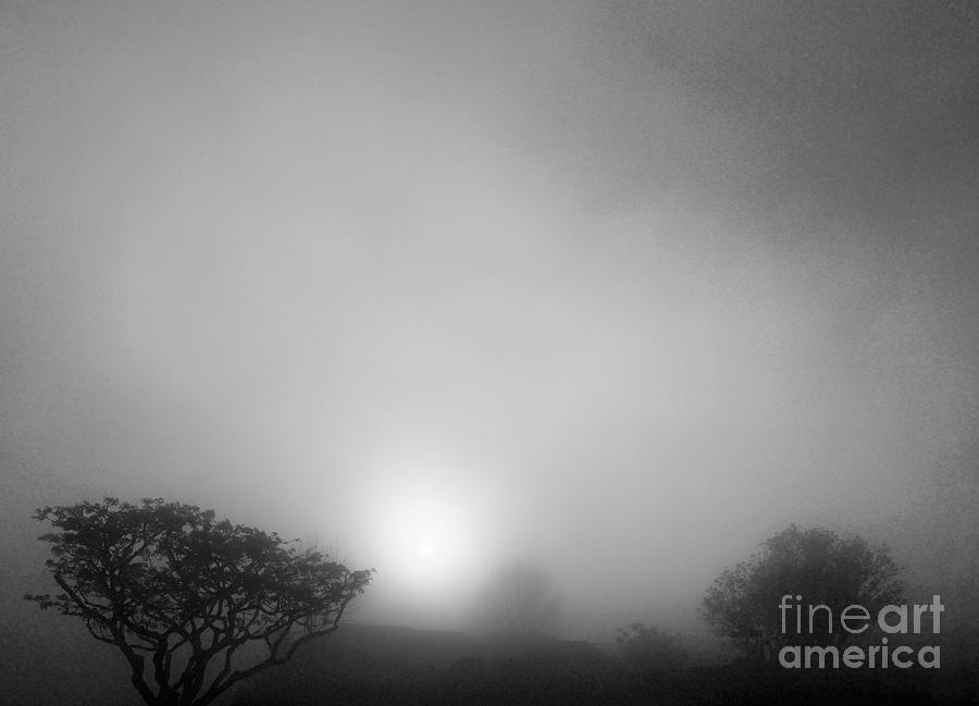 Foggy Morning Sunrise by Eric Suchman