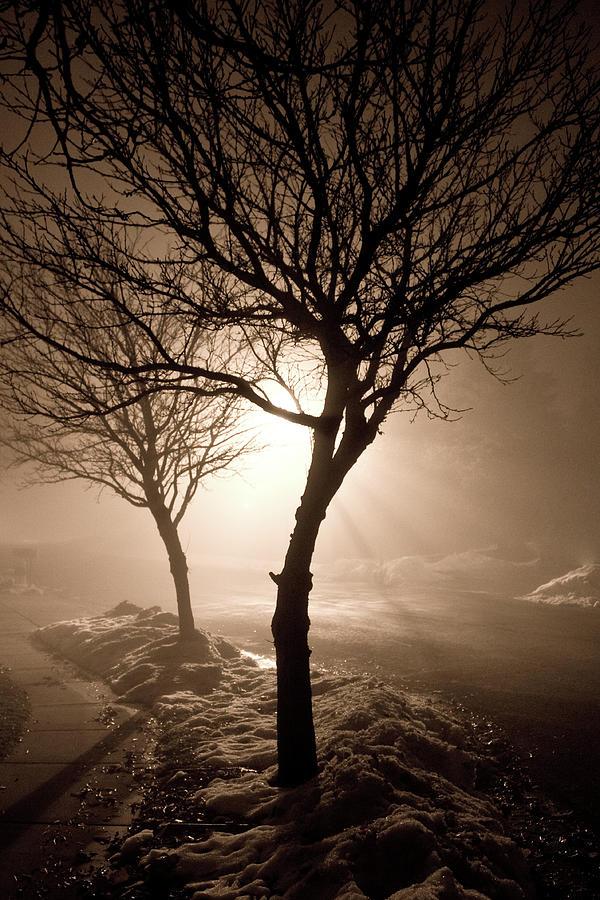Nature Photograph - Foggy Night by Elizabeth Richardson