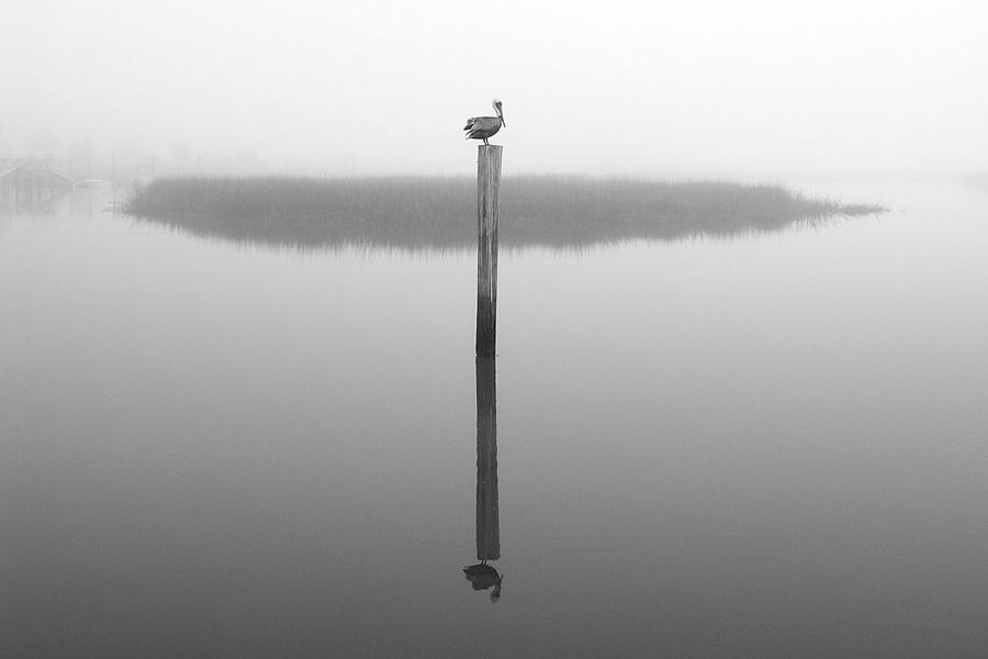 Pelican Photograph - Foggy Roost Number Three by Winthrope Hiers