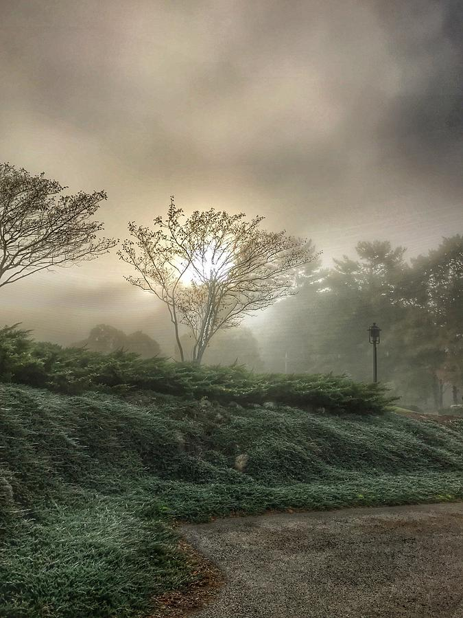 Foggy Sunrise by Pat Moore