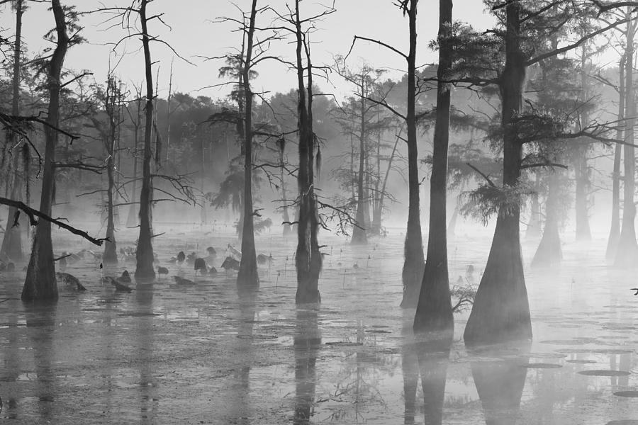 Foggy Swamp by Dead Cypress Photography