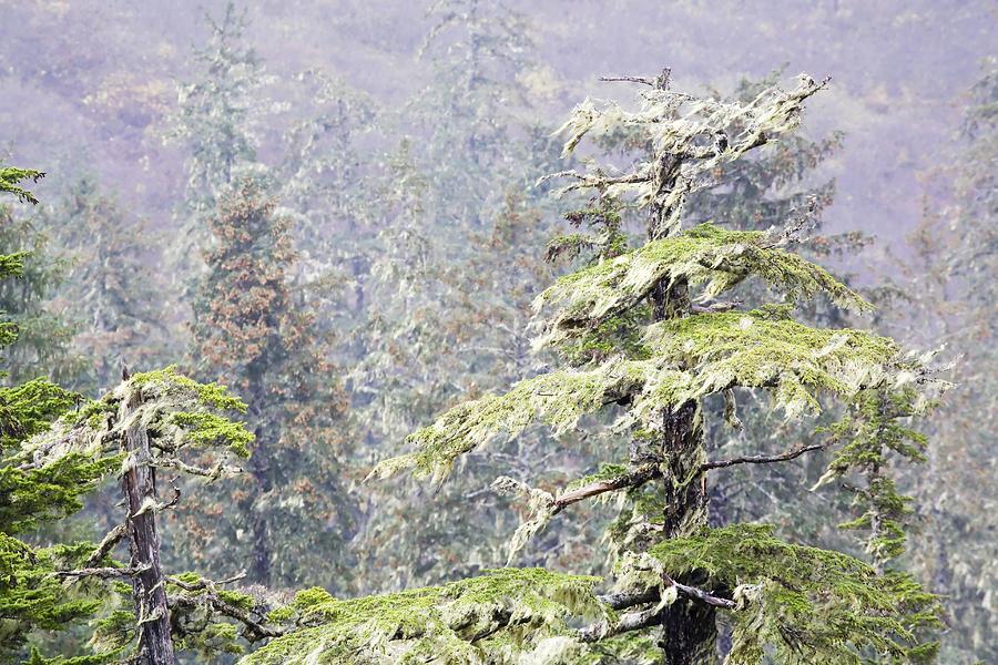 Alaska Photograph - Foggy Tongass Rain Forest by Eggers Photography