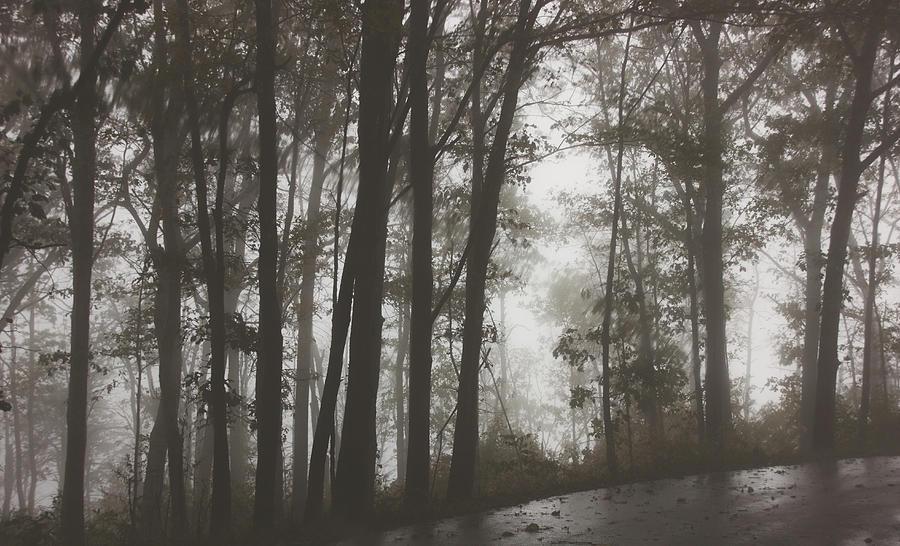 Foggy Trees by Angel Sharum