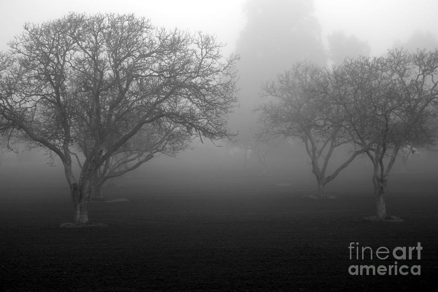 Foggy Trees by Balanced Art