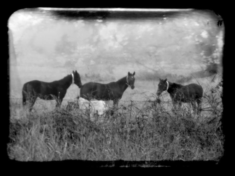 Horses Photograph - Horse trio in morning fog by Toni Hopper