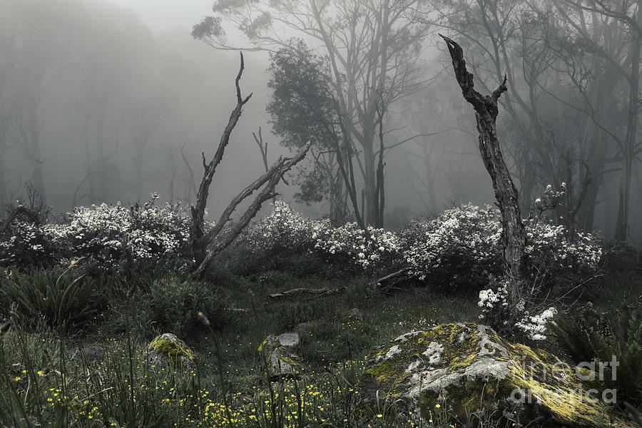 Tree Photograph - Fogscape by Andrew Paranavitana