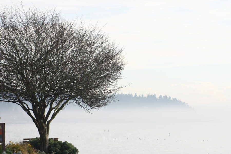 Tree Photograph - Fogscape by Trudy Parman