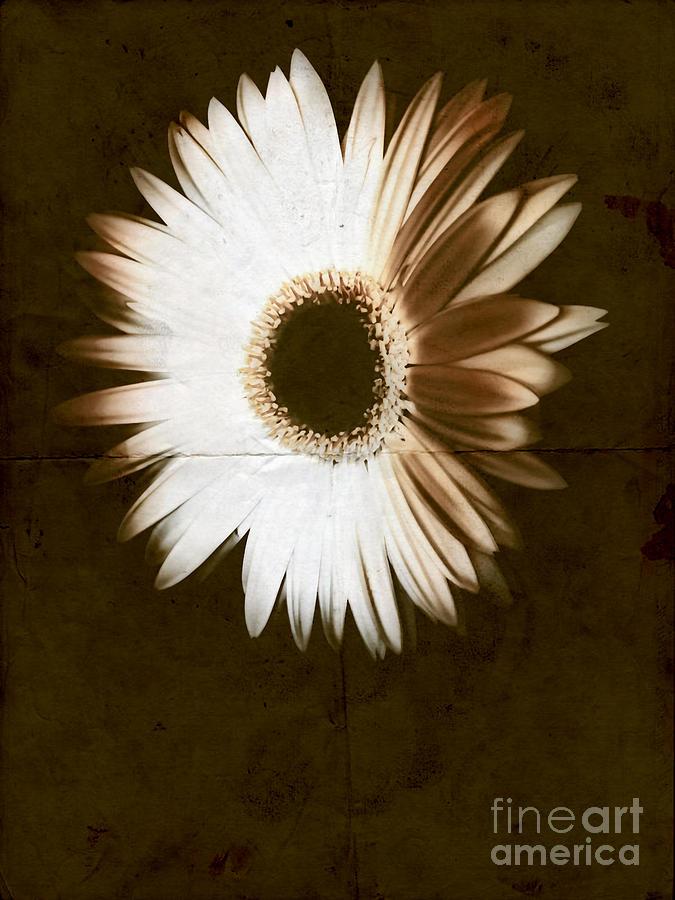Fold Photograph - Folded Daisy by Heather Joyce Morrill