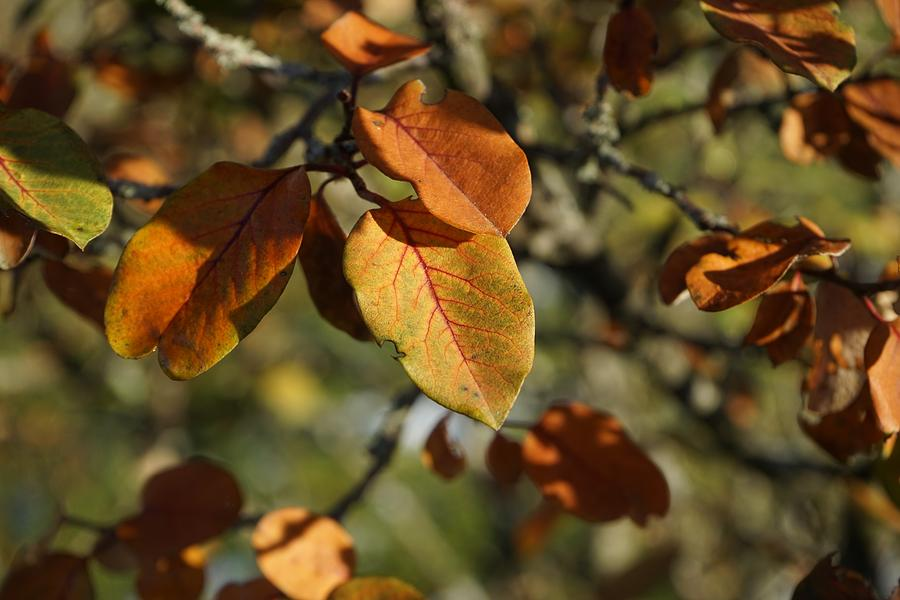 Autumn Photograph - Foliage by Christian Trajkovski