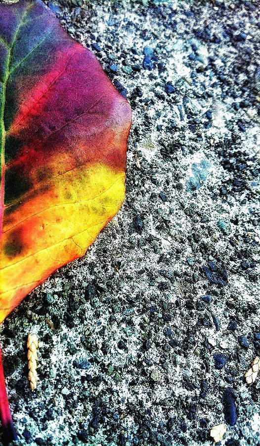 Foliage Leaf Photograph