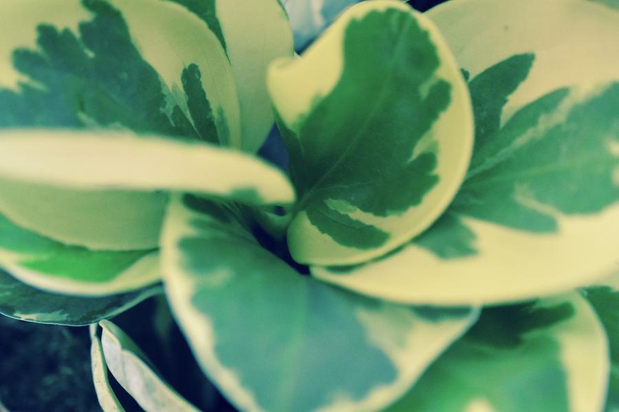 Foliage Swirl Photograph