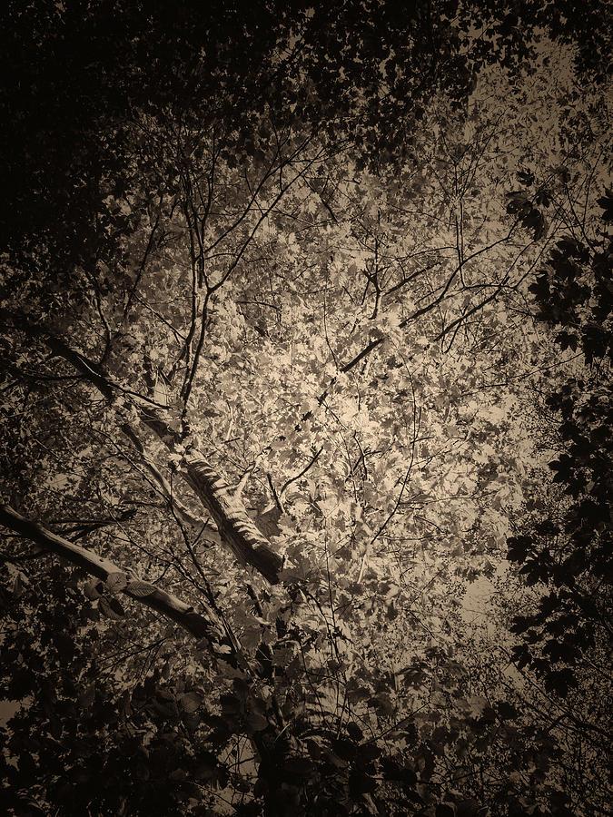 Foliage Photograph - Foliage by Wim Lanclus