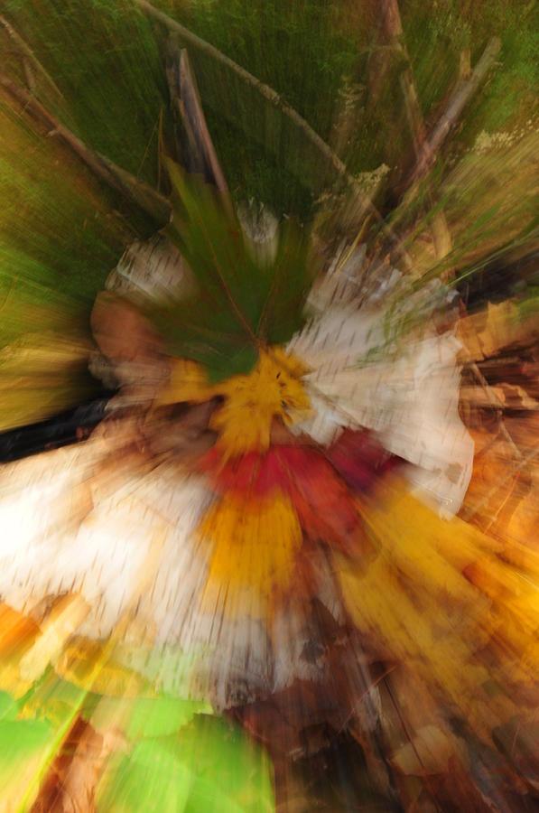 Autumn Photograph - Foliage Zoom by Nancy Marshall