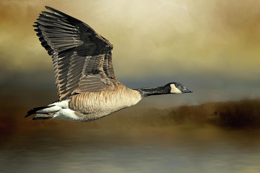 Canada Geese Photograph - Follow The Shoreline by Donna Kennedy
