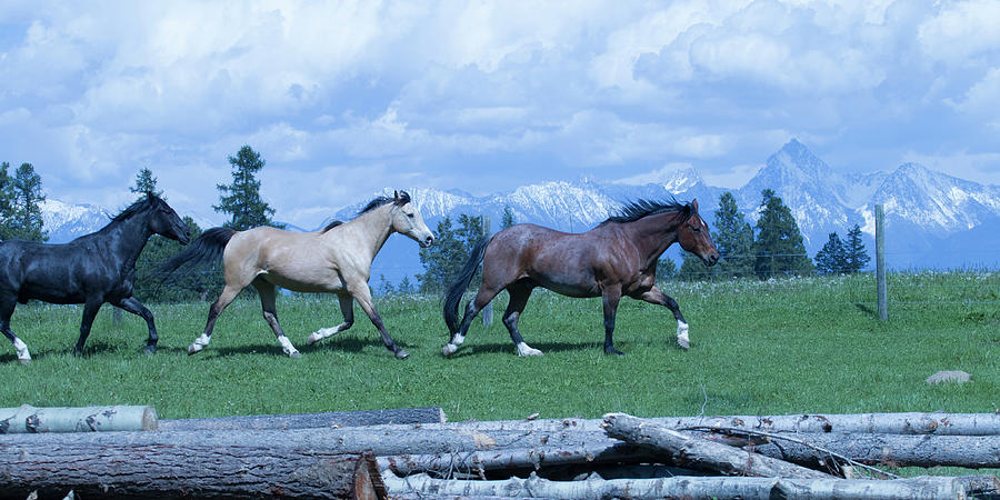 Horses Photograph - Following The Bay by Eleszabeth McNeel