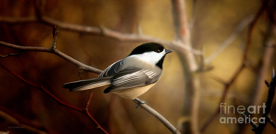 Black Capped Chickadee Painting - Following The Light by Beve Brown-Clark Photography