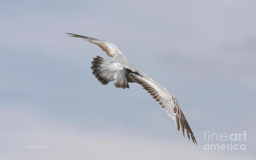 Seagull Photograph - Following The Seagull by Deborah Benoit