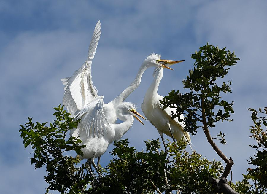 Great Egrets Photograph - Food Competition 2 by Fraida Gutovich