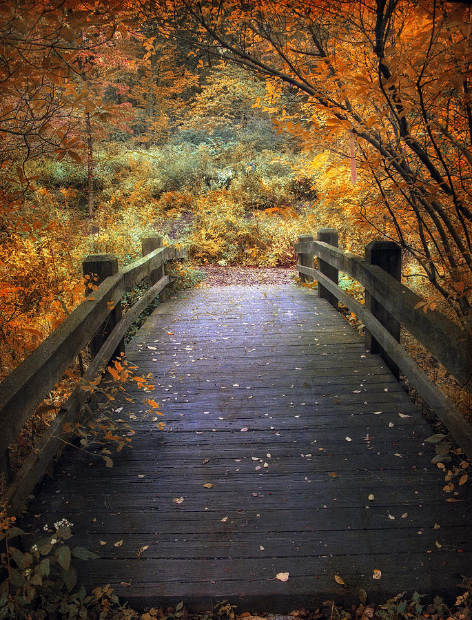 Seasonal Photograph - Footbridge Canopy by Jessica Jenney