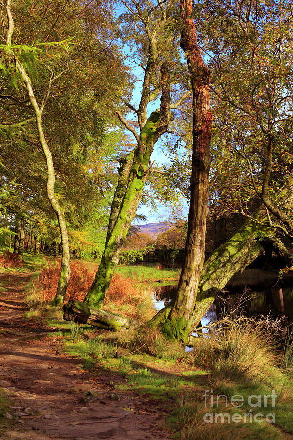 Footpath Photograph - Footpath At The Edge Of Lantys Tarn In The Lake District Cumbria by Louise Heusinkveld