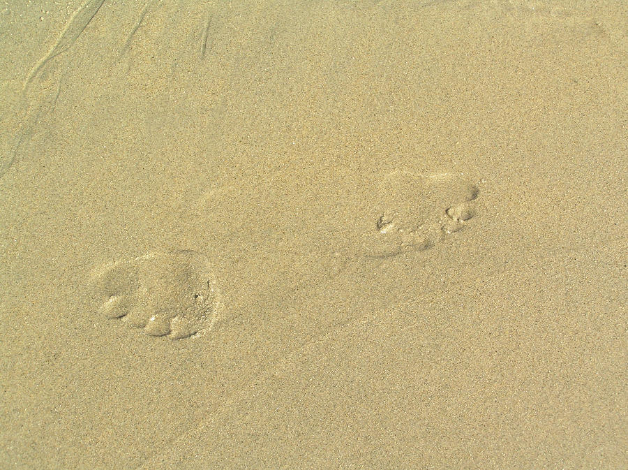 Footprints In The Sand Photograph by Chuck Cannova