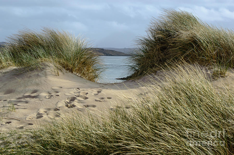 Dunes Photograph - Footprints In The Sand by Julie Chambers