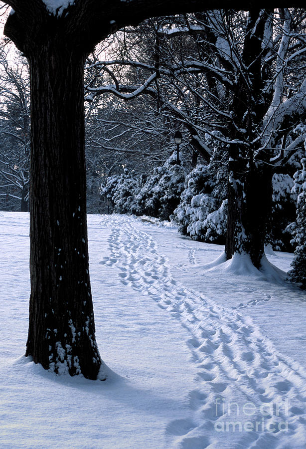 Cold Photograph - Footprints In The Snow by William Kuta