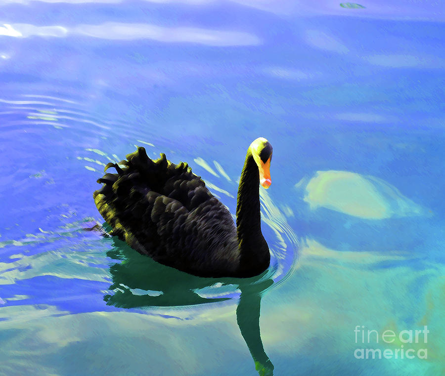 Swan Photograph - For A Swim by Jost Houk