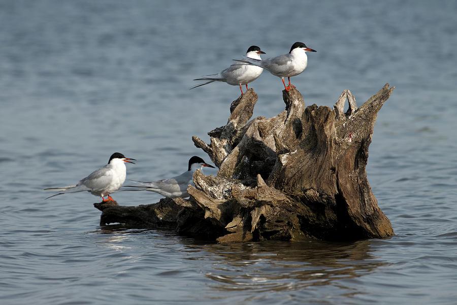 For Every Season Tern Tern Tern by Shoeless Wonder