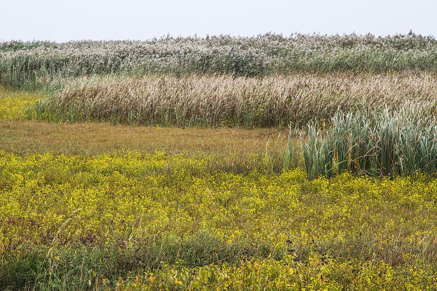 Wetlands Photograph - For The Birds II by Dawn J Benko