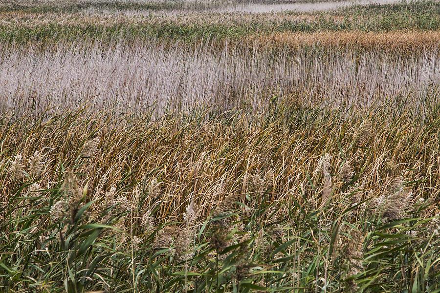 Wetlands Photograph - For The Birds V by Dawn J Benko