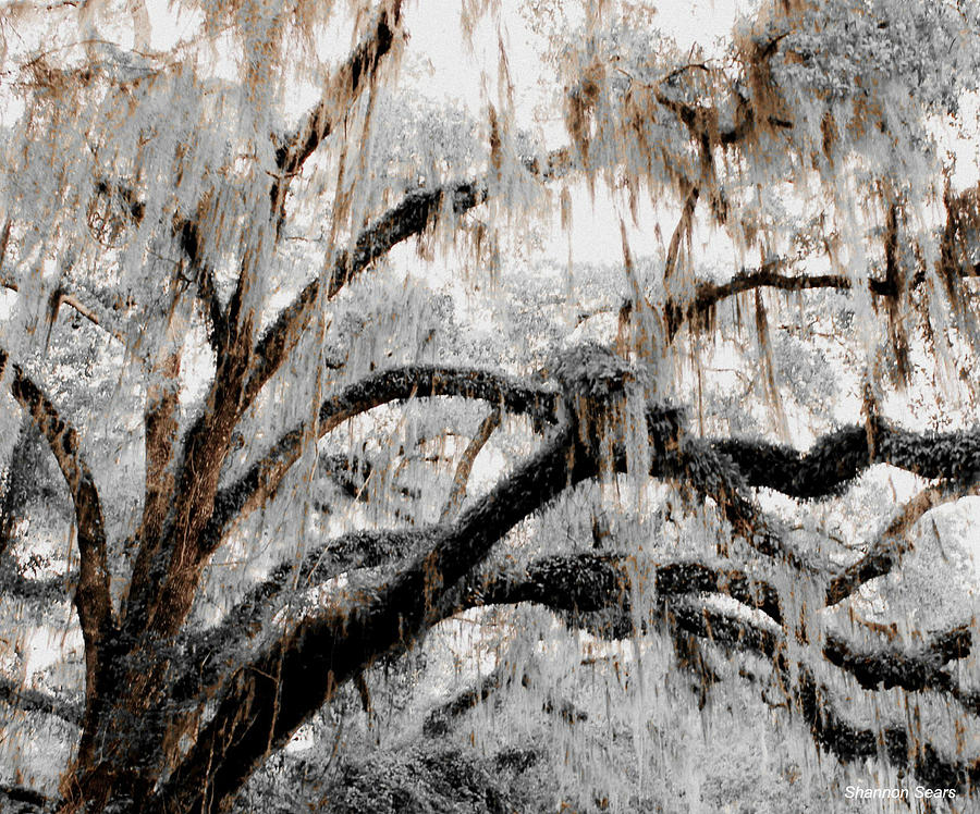 Shannon Digital Art - For The Grace Of The Beauty Of A Aged Tree by Shannon Sears