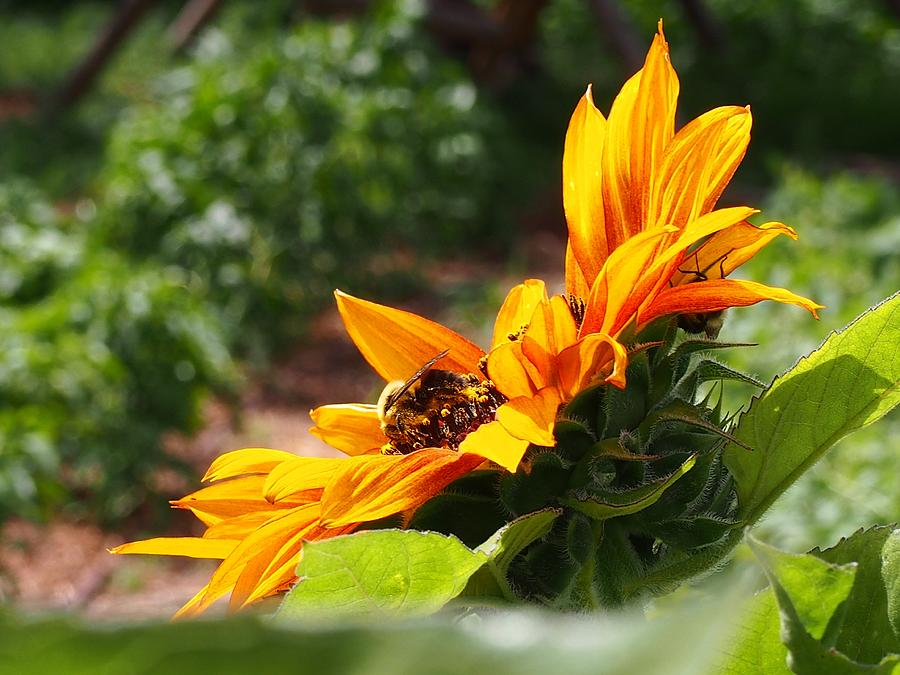 Bee Photograph - For The Honey Comb by Kayla Hall
