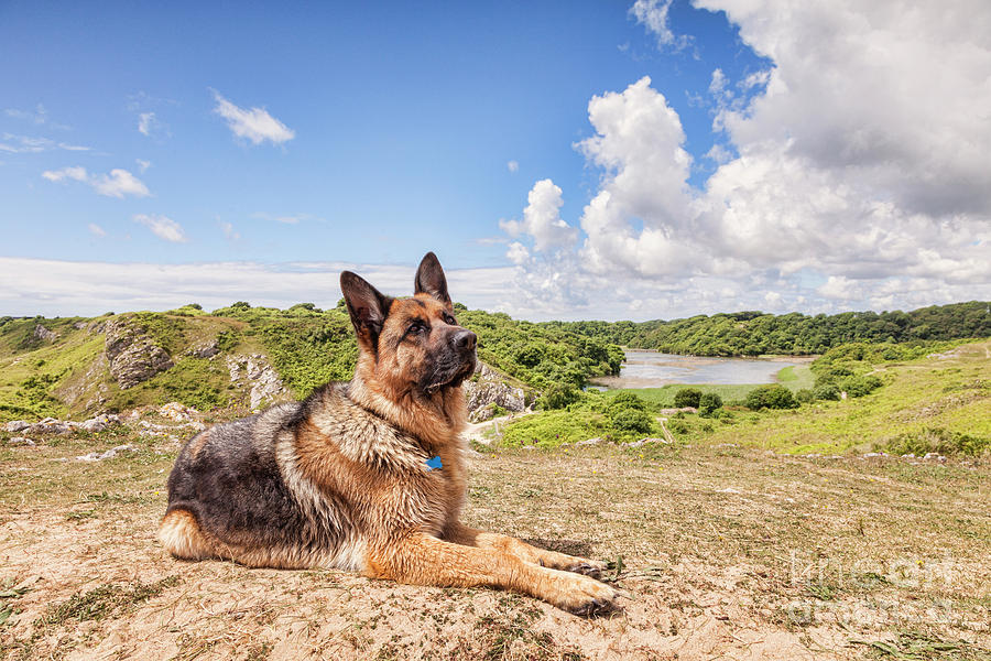 German Shepherd Photograph - For The Love Of Dogs by Colin and Linda McKie