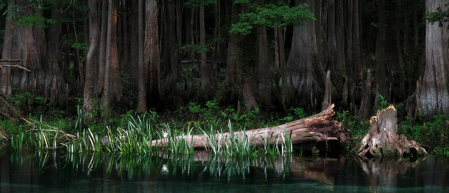Swamp Photograph - Forbidden Swamp by Matt Tilghman